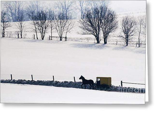 Old Country Roads Greeting Cards - Amish Horse and Buggy in Snowy Landscape Greeting Card by Jeremy Woodhouse