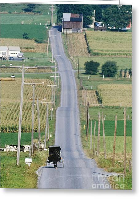Old Country Roads Greeting Cards - Amish Horse and Buggy on Country Road Greeting Card by Jeremy Woodhouse