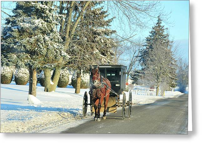 Horse And Buggy Greeting Cards - Amish Winter Greeting Card by David Arment