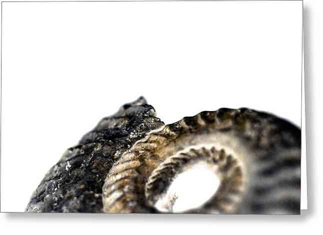 Wipe Out Greeting Cards - Ammonite Fossil Greeting Card by Neal Grundy