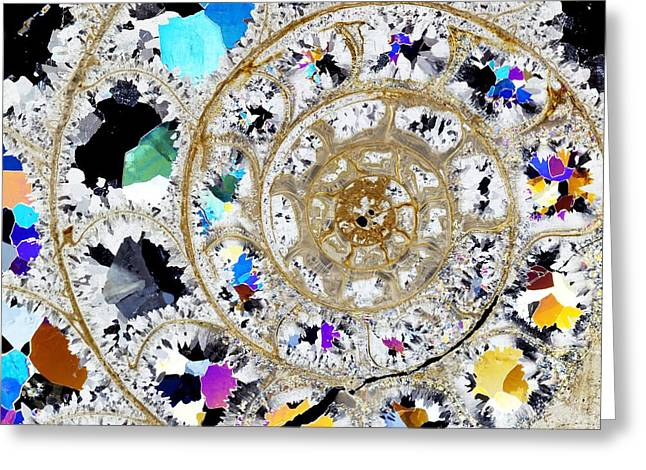 Ammonite Fossil, Thin Section Greeting Card by Dirk Wiersma