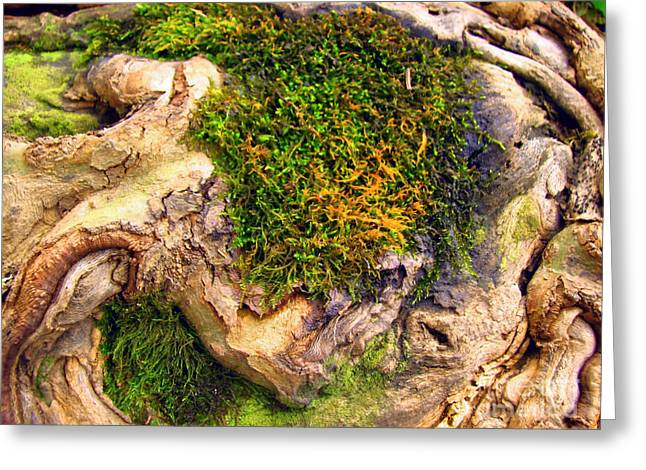 Tree Roots Photographs Greeting Cards - Among the Tree Roots Greeting Card by Todd A Blanchard
