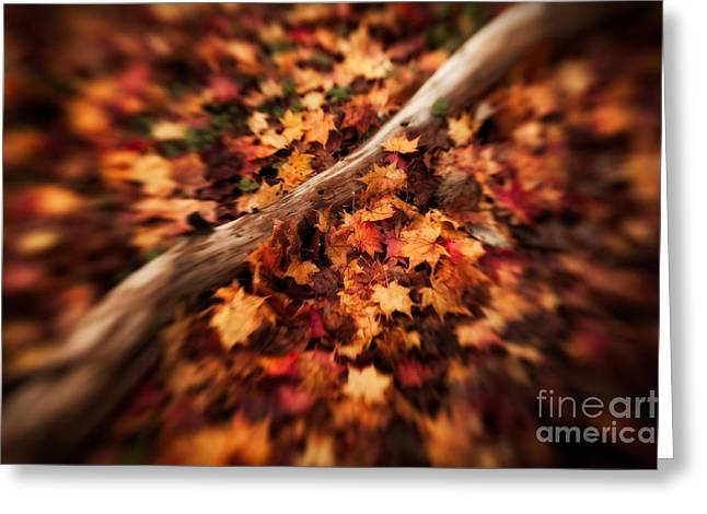 Van Dusen Botanical Garden Greeting Cards - Amongst the Leaves Greeting Card by Venetta Archer