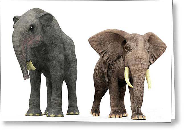 Large Scale Digital Art Greeting Cards - An Adult Deinotherium Compared Greeting Card by Walter Myers