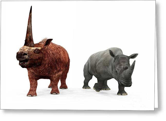 Large Scale Digital Art Greeting Cards - An Adult Elasmotherium Compared Greeting Card by Walter Myers