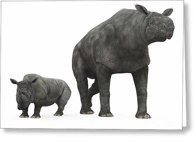 Large Scale Digital Art Greeting Cards - An Adult Paraceratherium Compared Greeting Card by Walter Myers