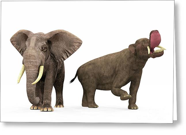 Large Scale Digital Art Greeting Cards - An Adult Platybelodon Compared Greeting Card by Walter Myers