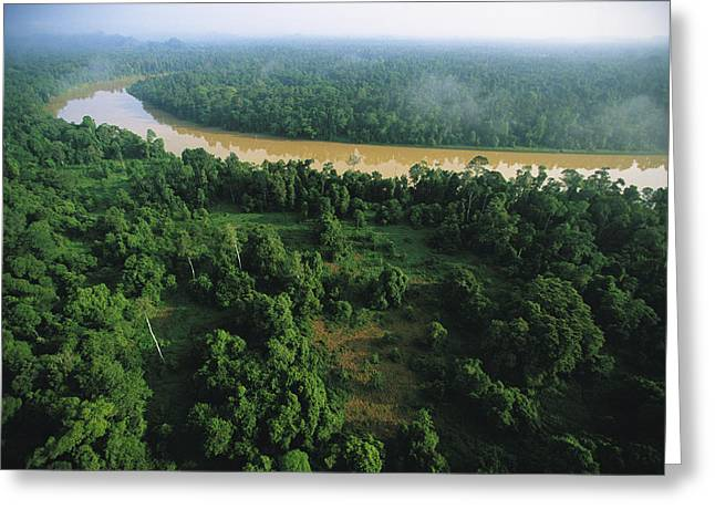 Borneo Island Greeting Cards - An Aerial View Of Borneo Asian Elephant Greeting Card by Tim Laman