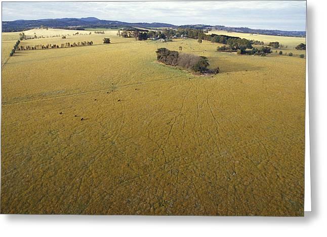 An Aerial View Of Farmland Greeting Card by Jason Edwards