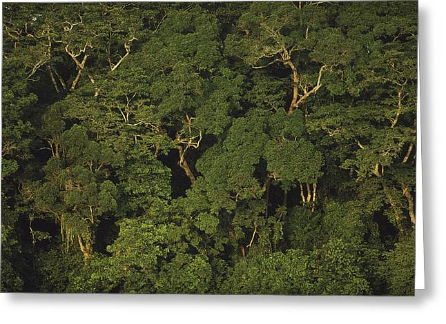 Woodland Scenes Greeting Cards - An Aerial View Of The Rain Forest Greeting Card by Michael Nichols