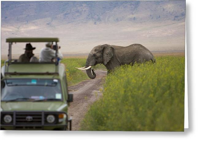 An African Elephant Crosses The Road Greeting Card by Ralph Lee Hopkins