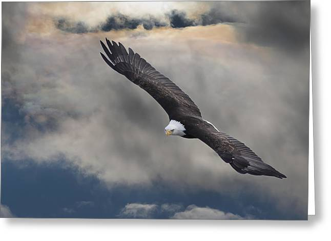 An Eagle In Flight Rising Above The Greeting Card by Robert Bartow