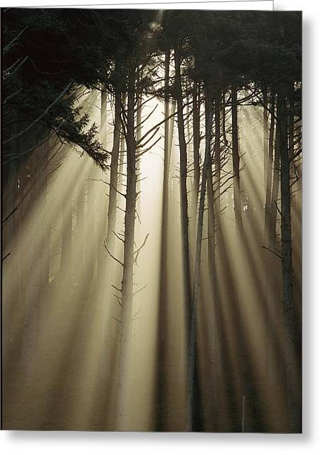 Light And Dark Greeting Cards - An Early Morning View Of Sunrays Greeting Card by Phil Schermeister