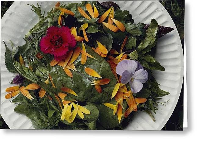 An Edible Salad At The Tilth Harvest Greeting Card by Sam Abell