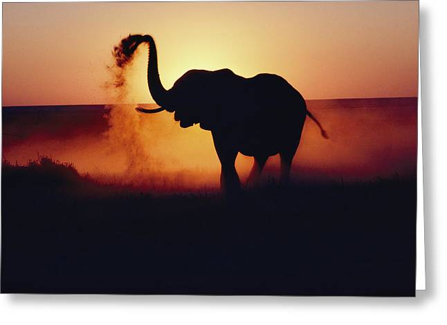 Scenes And Views Photographs Greeting Cards - An Elephant Loxodonta Africana Tosses Greeting Card by Annie Griffiths