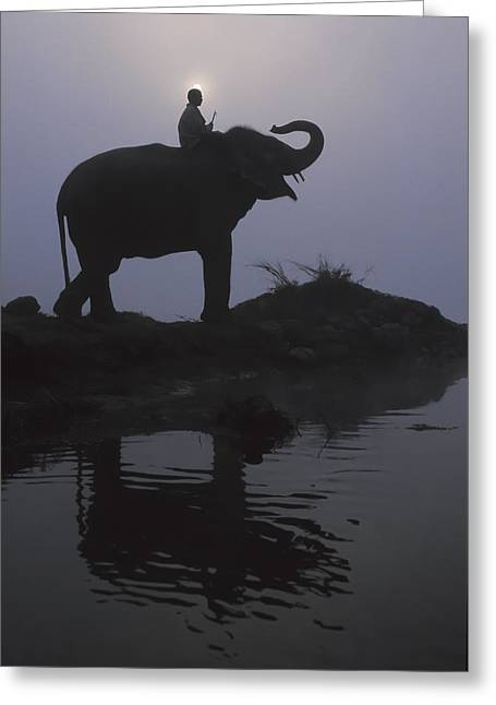 An Elephant With Its Mahout Stand At Greeting Card by Sean White