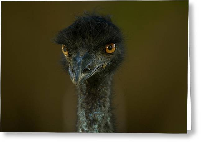 Emu Greeting Cards - An Emu At The Lincoln Childrens Zoo Greeting Card by Joel Sartore