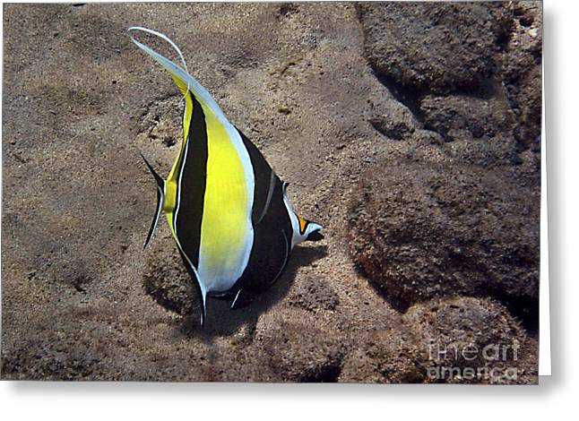 Reef Fish Greeting Cards - An Exceptional Idol Greeting Card by Bette Phelan