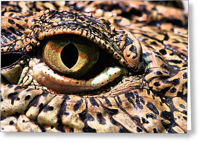 An Eye On You Greeting Card by JC Findley