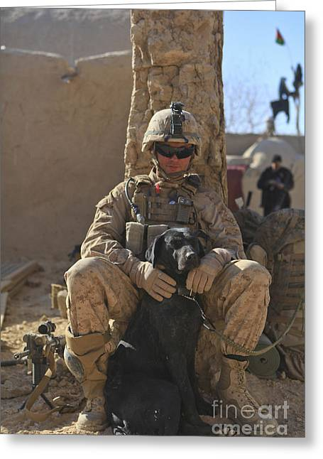 Guard Dog Greeting Cards - An Ied Detection Dog Keeps His Dog Greeting Card by Stocktrek Images