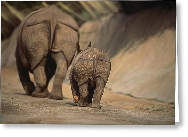 Indian Rhinoceros Greeting Cards - An Indian Rhinoceros And Her Baby Greeting Card by Michael Nichols