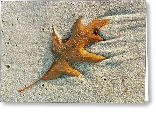Plant Growth And Decay Greeting Cards - An Oak Leaf Lying In Wet Sand Greeting Card by Bill Curtsinger