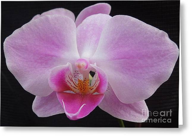 Flowers With Back Ground Greeting Cards - An Orchid Greeting Card by Chad and Stacey Hall