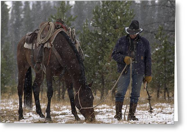 Best Sellers -  - Grazing Snow Greeting Cards - An Outfitter Lets His Horse Graze Greeting Card by Annie Griffiths