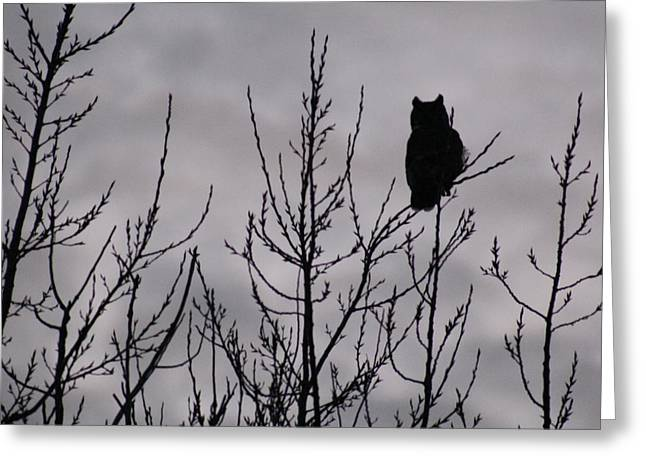 Sillouette Greeting Cards - An Owl Silhouette Greeting Card by Christy Patino