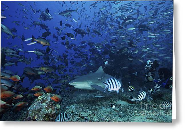 Person Of Color Greeting Cards - An Underwater Photographer Films Greeting Card by Terry Moore