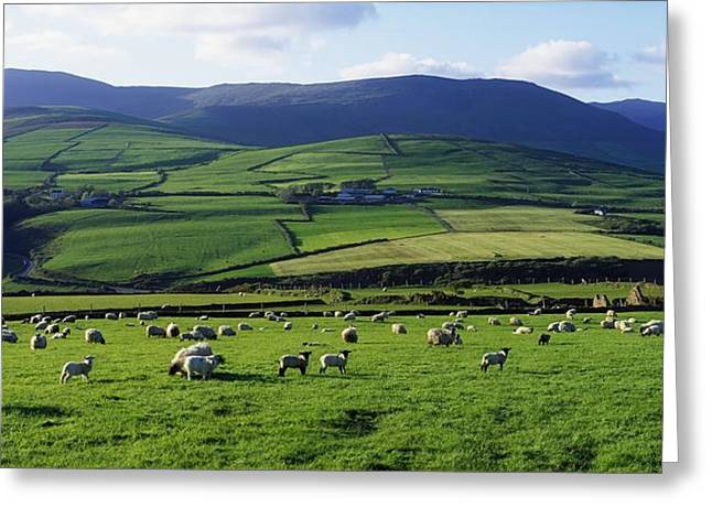 Incline Greeting Cards - Anascual, Dingle Peninsula, Co Kerry Greeting Card by The Irish Image Collection