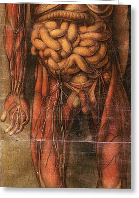 Full Body Greeting Cards - Anatomie Generale Des Visceres Greeting Card by Science Source