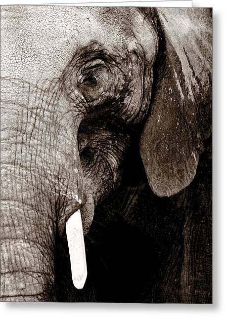 Elephant In The Room Greeting Cards - Ancient Face Greeting Card by Angela Rath