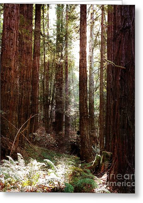 Santa Cruz Digital Greeting Cards - Ancient Redwoods and Ferns Greeting Card by Laura Iverson