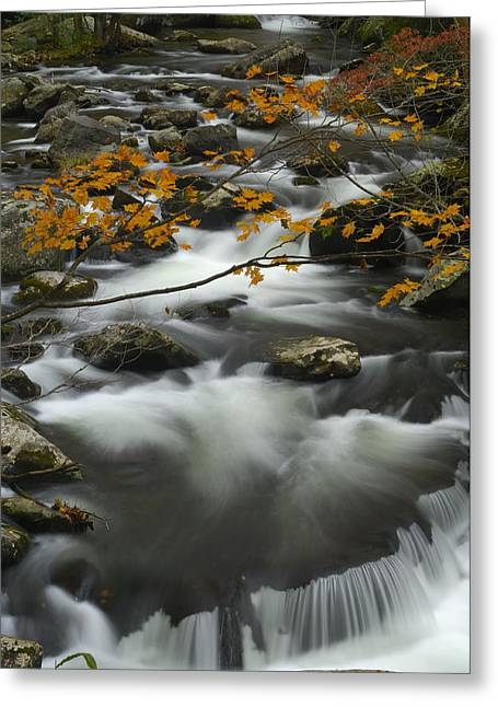 Pigeon In Park Greeting Cards - Ancient River in Great Smoky Mountains Greeting Card by Darrell Young