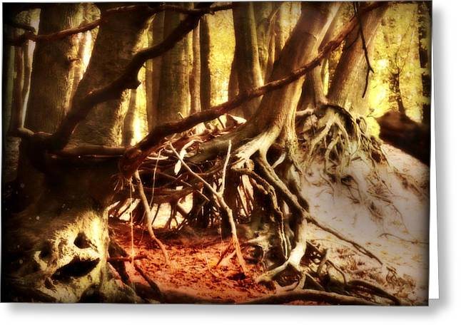 Dark Roots Greeting Cards - Ancient Roots Greeting Card by Danny Van den Groenendael