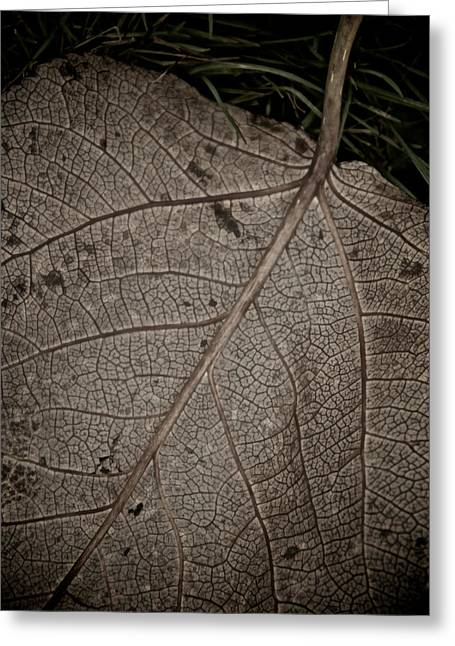 Fallen Leaf Greeting Cards - Ancient Skin Greeting Card by Odd Jeppesen
