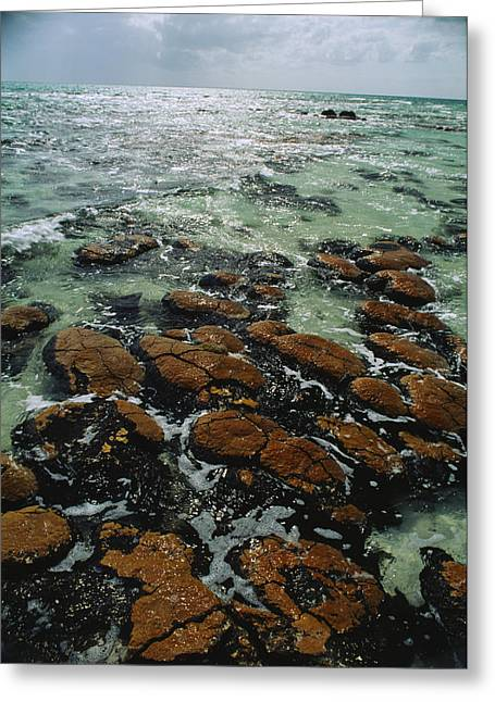 Microscopic Entities Greeting Cards - Ancient Stromatolite Reefs Still Greeting Card by O. Louis Mazzatenta