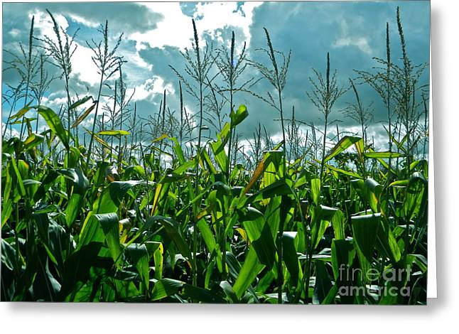 The Cornfield Greeting Cards - And Here I am Home Greeting Card by Chuck Taylor