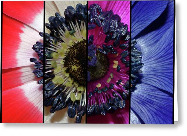 Original Photographs Greeting Cards - Anemone Flower Slices Greeting Card by Robert Shard