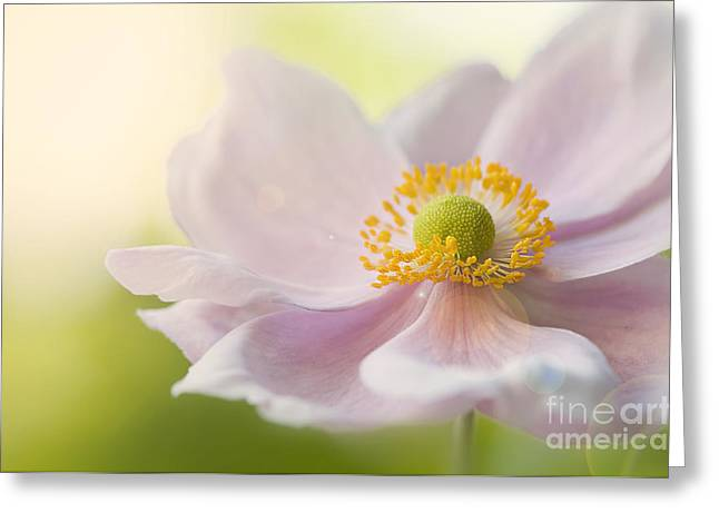 Flare-up Greeting Cards - Anemone Haze Greeting Card by Jacky Parker