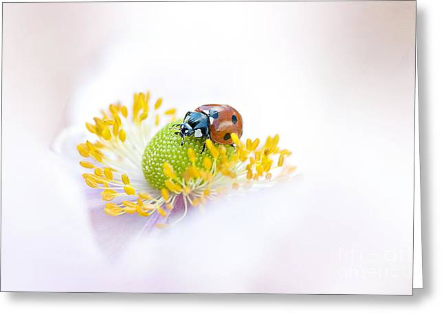 Anemone lady Greeting Card by Jacky Parker
