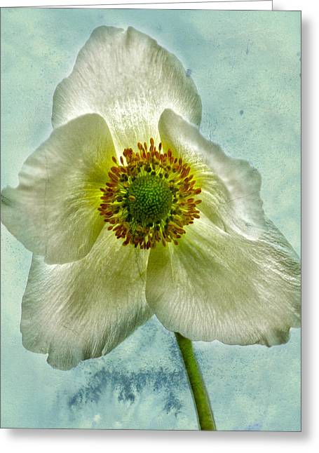Edmonton Photographer Greeting Cards - Anemones  Anguish  Greeting Card by Jerry Cordeiro