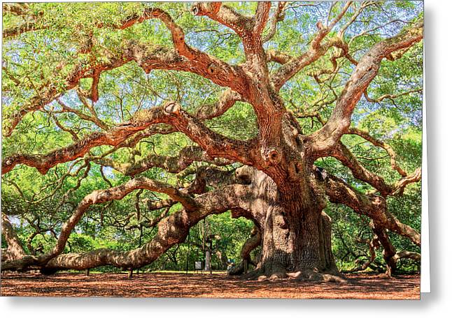Moss Greeting Cards - Angel Oak - Charleston SC  Greeting Card by Drew Castelhano