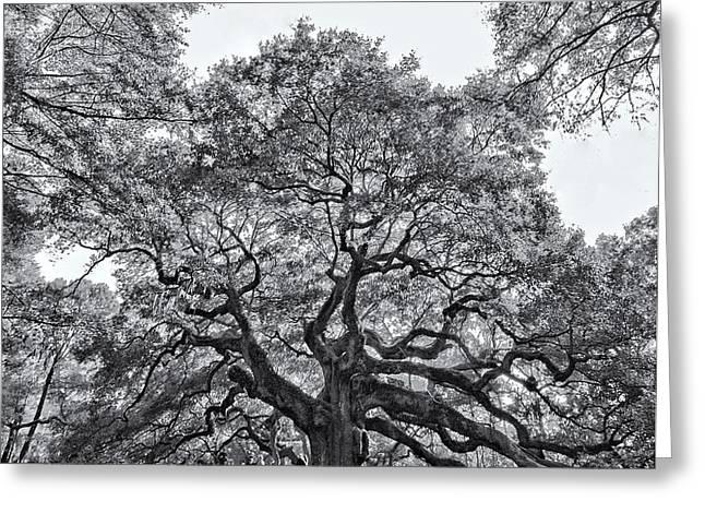 Angel Oak Greeting Card by Dave Stegmeir