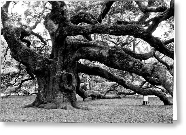 Angel Oak In Spring Photographs Greeting Cards - Angel Oak Tree 2009 Black and White Greeting Card by Louis Dallara