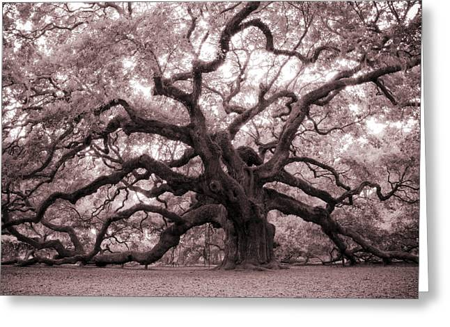 Oaks Greeting Cards - Angel Oak Tree Greeting Card by Dustin K Ryan