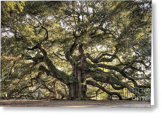 Charleston Greeting Cards - Angel Oak Tree Live Oak  Greeting Card by Dustin K Ryan