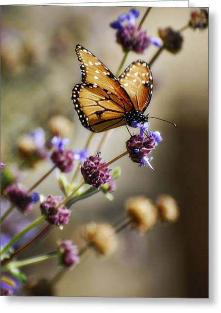 Queen Butterfly Greeting Cards - Angel Wings  Greeting Card by Saija  Lehtonen