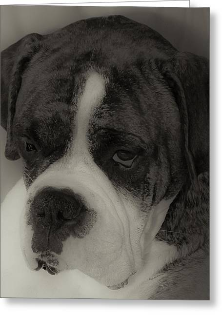 Boxer Greeting Cards - Angelic Boxer Greeting Card by DigiArt Diaries by Vicky B Fuller